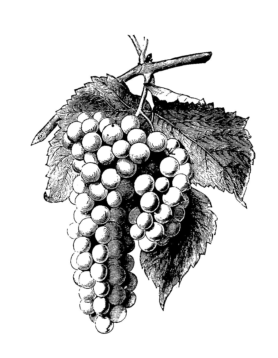 Weinverkostung mit Gössl Fürstenfeld